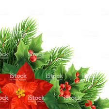Weihnachten Weihnachtsstern Blume Realistische
