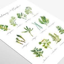 Printable Culinary Herb Chart Shop Herb Art Prints On Wanelo