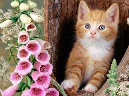 sweet cat love. Brilliant Cat Sweet Cats 15 An Indispensable Part Of The Animal World Each Serve A  Purpose We Should Love And Protect Them On Sweet Cat Love