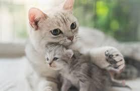 Naulici skončí ročně přes28 tisíc koček. Množí segeometrickou řadou |  Domácí mazlíčci | Lidovky.cz
