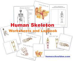 Human Body: Skeletal System - Homeschool Den
