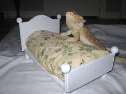 dragon shaped bed frame. Perfect Shaped White Bearded Dragon Bed With Refillable Washable Mattress Click To  Purchase Or Visit Me Throughout Dragon Shaped Bed Frame