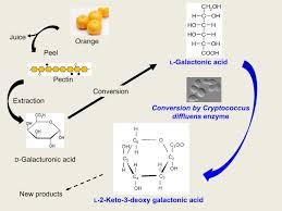 Fermentation Free Full Text Basidiomycotic Yeast Cryptococcus