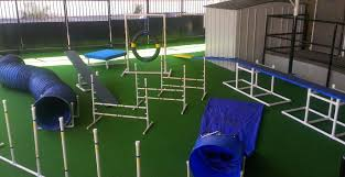 agility course the complete dog