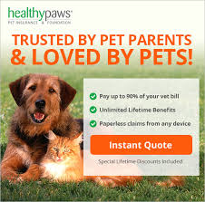 pet insurance healthy paws