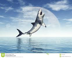 great white shark jumping. Modren Great Great White Shark Jumping For
