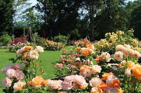 the rose garden in arboretum volčji potok