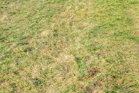 Image For Lawns Pesky Bugs Mean Trouble For Lawns Winnipeg Free Press