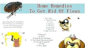 diatomaceous earth fleas yard treatment in how to get rid home remes