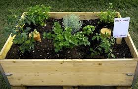 vegetable terrace garden for organic