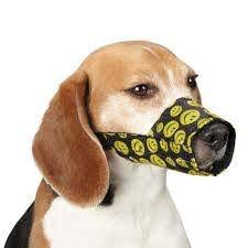 stop dog from licking wound. Fine Dog My Dog Was So Lithe He Could Reach Around The Collar To Lick Everywhere  So I Used This Sort Of Muzzle On Him He Still Slightly  In Stop Dog From Licking Wound D
