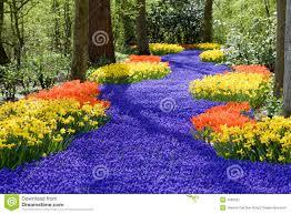 Free Spring Spring Flowers Stock Image Image Of Flora Floral Spring 4993637