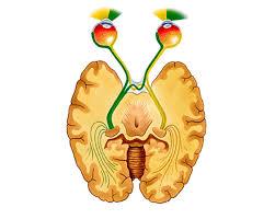 Split Brain: Historia de un cerebro dividido Images?q=tbn:ANd9GcSx9rWXMxBKr8SRoOt_lCikRk973V3w3YpSuCPRAXJkOKYn2cBF