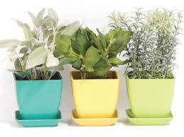 indoor herb garden ideas. Indoor Culinary Herb Kit / Build An Garden Ideas