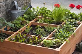 Garden Plants Zone 7b Container Gardening Zone 7 Vegetable Container Garden Plans
