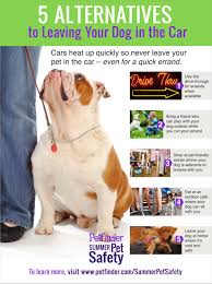 Infographic 5 Fun Alternatives To Leaving Your Dog In The