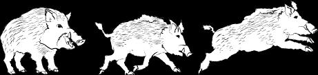 線画風のイノシシ2019干支亥年無料イラスト 使いやすい無料の