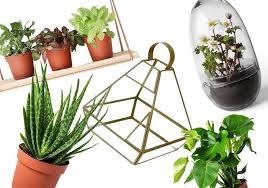 House And Garden 8 Week Feed Chart 8 Best House Plants Hanging Planters And Terrariums The