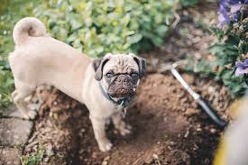 garden border fencing ways from destroying your flowerbeds ways garden fence to keep dogs out to