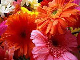 beautiful flowers desktop background