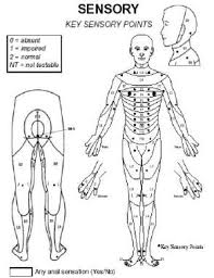 Spinal Cord Injury Chart Spinal Cord Injury Levels Classification Travis Roy