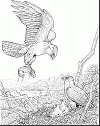 Small Picture Awesome American Bald Eagle Coloring Page Gallery Coloring Page