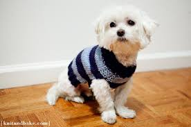 Free Knitted Dog Sweater Patterns Enchanting Top 48 Free Knitting Patterns For Cats And Dogs Top Inspired