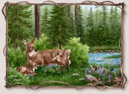 the beauty of nature deer