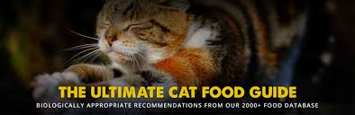 Diabetic Cat Food Chart The 8 Best Cat Food Reviews From Our Insanely Huge Food