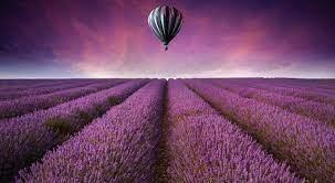 วอลเปเปอร์ : แนวนอน, ฟิลด์, บอลลูนอากาศร้อน, ดอกไม้สีม่วง, ปลูก,  โรงงานที่ดิน, พืชดอก, ภาษาอังกฤษลาเวนเดอร์ 3500x1920 - Einhard - 288951 -  วอลเปเปอร์ hd - WallHere