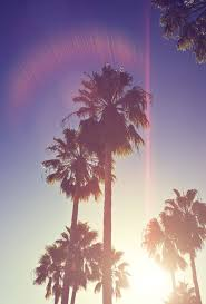 palm trees tumblr vertical. Summer, Palm Trees, And Sun Image Trees Tumblr Vertical