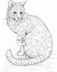 Realistic Cat Coloring Page For Kids Animal Coloring Pages