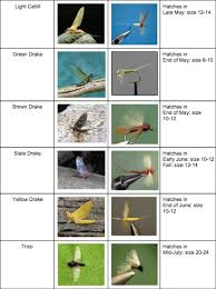 Fly Fishing Flies Chart Fly Fishing Flies Chart Create A Free Website Fly Fishing