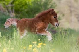 baby mini horse. Fine Horse 3 Mini Horse Mimi With Baby I