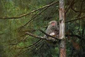Amazon Rhesus Chart Worlds Smallest Fossil Monkey Found In Amazon Times Of India