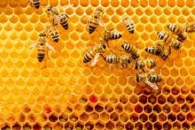 Managing Varroa Mites In Honey Bee Colonies Small Farm