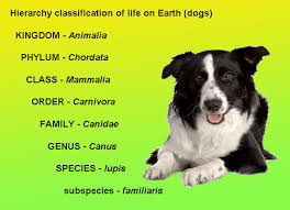 Dog Scientific Classification Chart Geology Cafe Com