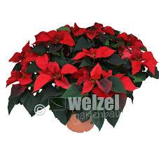 Winter Gartenbau Welzel