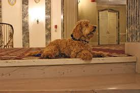 Meet Milwaukee's First and Only Canine Concierge