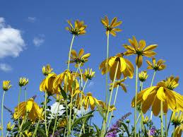 コンポジット フローラ 夏の花の無料の写真素材