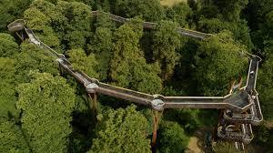 Aerial view of Treetop Walkway