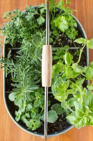 Herb Garden Best 25 Window Herb Gardens Ideas Only On Pinterest Diy Herb