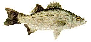 Texas Fish Chart Aquatic Species Found In Fresh Water