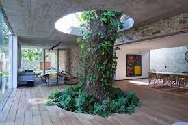 This is perhaps one of the most amazing examples of a tree inside a house   this residence in Brazil, built by architect Alessandro Sartore has a 3  meters ...
