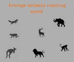 Animal Speed Chart Average Animals Running Speed All Animal Facts