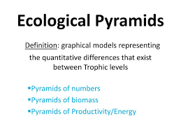 Pyramid Ppt Ppt Pyramids Of Numbers Pyramids Of Biomass Pyramids Of