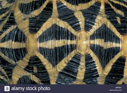 Tortoise Shell Pattern