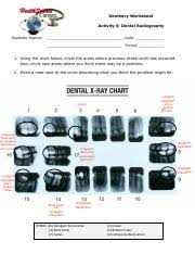 Dental X Ray Chart Pdf Dentistry Worksheet Activity 4