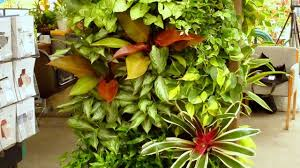 best garden plants. 10 Best Plants To Grow For Vertical Garden A