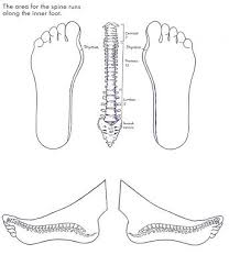 Itec Reflexology Blank Foot Chart Medial Reflexology Blank Template Google Search